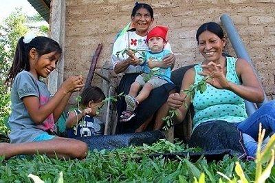 estudios amazonicos tiene un programa de agroforesteria que se ejecuta en la amazonia peruana