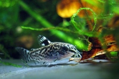 estudios amazónicos crea el primer acuario ecol+ogico del perú